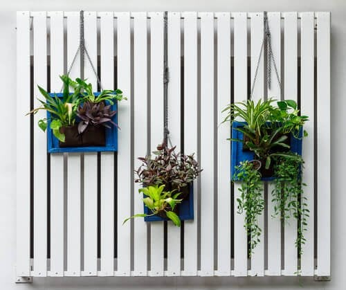 transformer un mur en jardin vertical