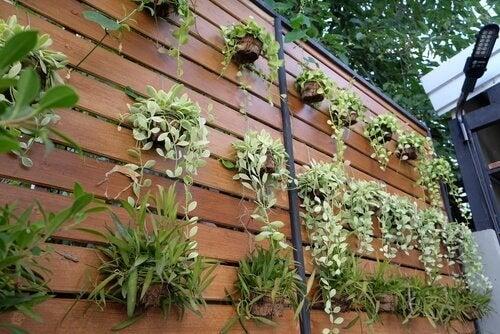 4 ideas para transformar un muro en un jardín vertical