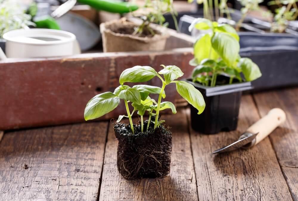 Les plantes à la maison purifient l'environnement