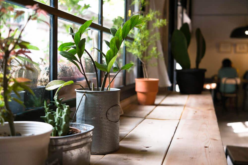 Les bienfaits pour la santé d'avoir des plantes à la maison