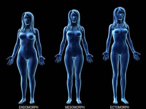 Connaitre le régime idéal pour votre type de corps