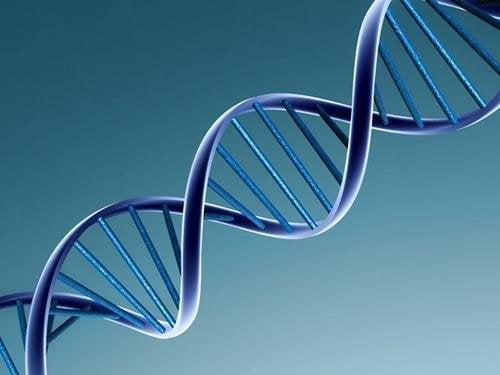 ADN des jumeaux