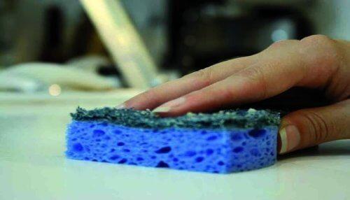 les éponges accumulent des millions de bactéries