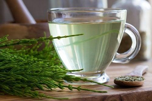 thé à la prêle pour lutter contre les calculs rénaux