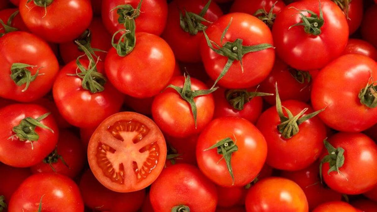 Faire Pousser Tomates En Pot comment faire pousser des tomates à l'infini avec seulement