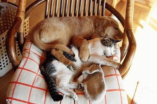 fabrication de lits pour animal de compagnie