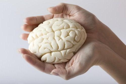 L'hydratation améliore le fonctionnement du cerveau