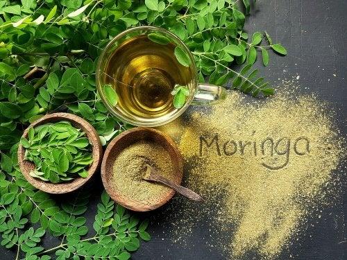 Infusion de Moringa oleifera pour traiter la fibromyalgie
