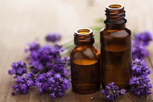 tea tree essential oil to fight against pests