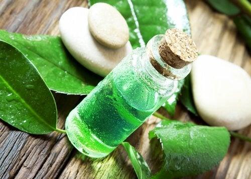 L'huile essentielle d'arbre à thé pour lutter contre les puces et les tiques