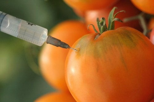 les organismes génétiquement modifiés sont des aliments cancérigènes