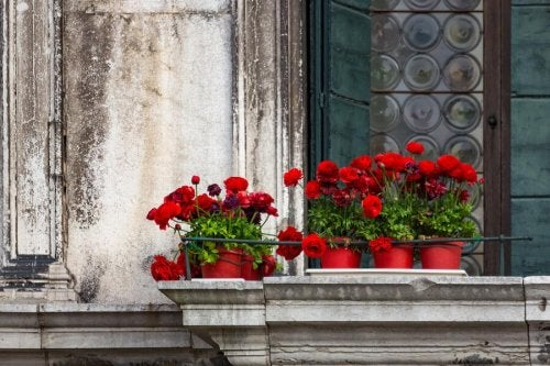 5 types de fleurs pour créer un jardin sur votre balcon