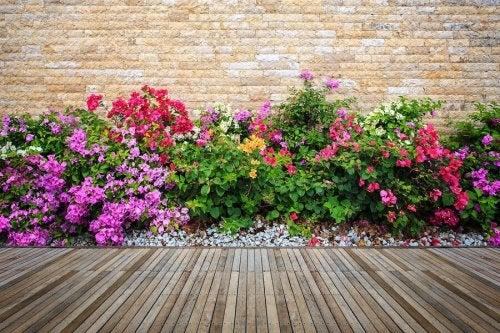jardin avec des fleurs et des pierres