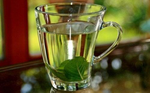 thé au basilic contre la fièvre