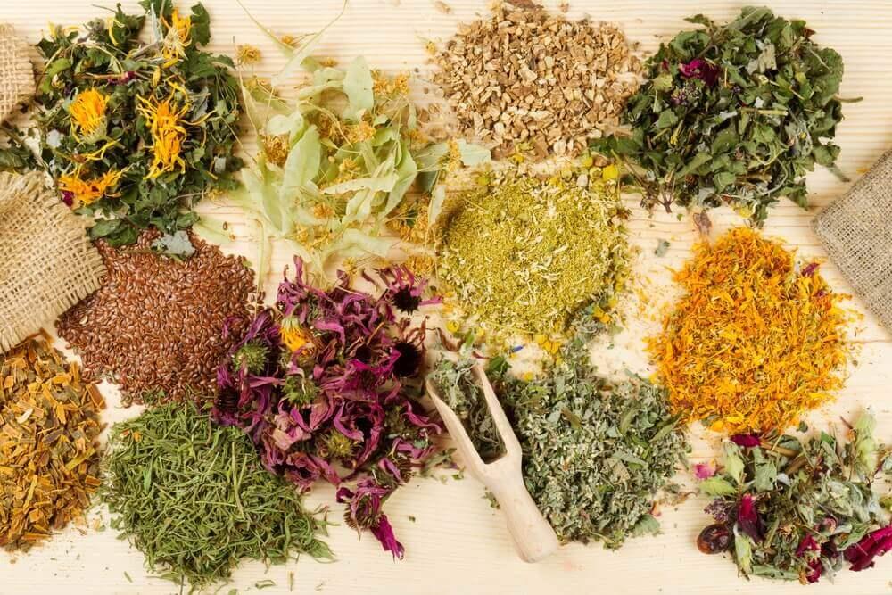 Des plantes médicinales pour soulager les maux d'estomac