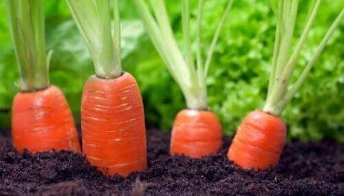 carottes valeur nutritionnelle