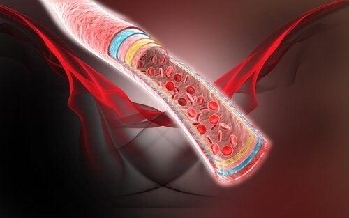 4 remèdes naturels pour la circulation sanguine