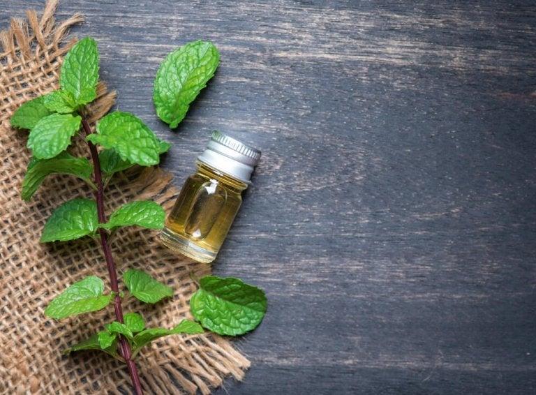 Découvrez les avantages de l'huile de menthe pour la santé