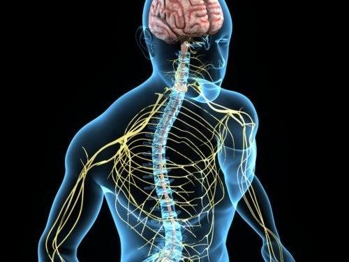 choline et système nerveux