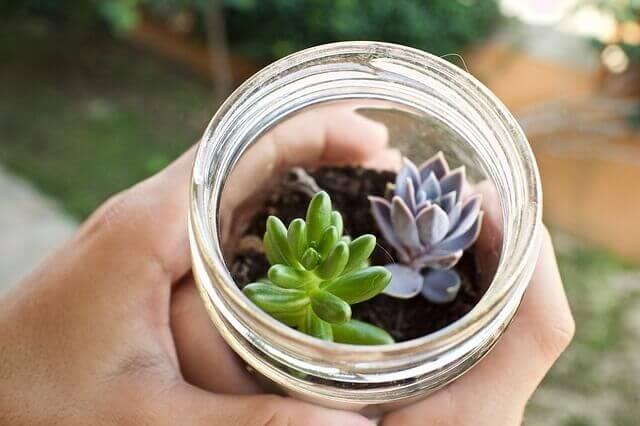 astuces pour un petit jardin
