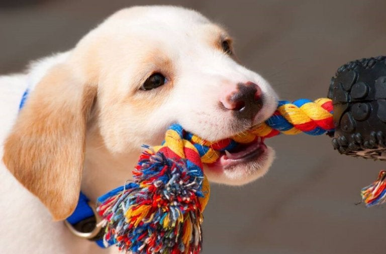 Apprenez à fabriquer des accessoires pour vos animaux de compagnie