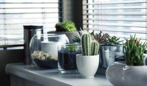 Plantes : 5 idées originales pour décorer son intérieur