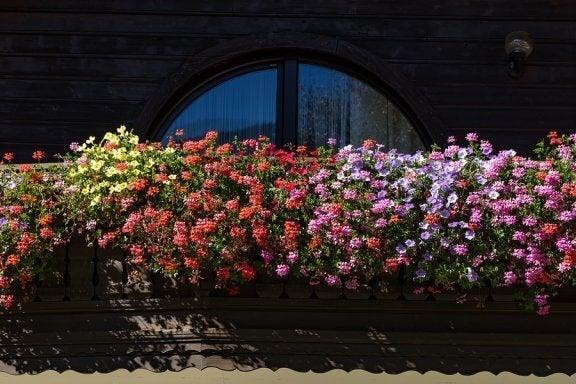 5 plantes parfumées pour un petit jardin aromatique