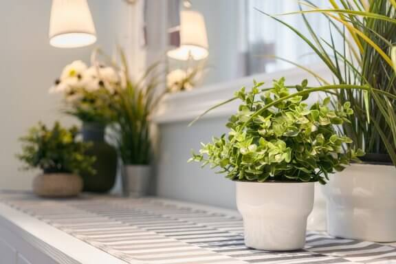 décorer son intérieur avec des plantes aux fenêtres