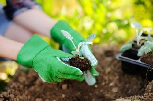 Conseils pour transplanter une plante