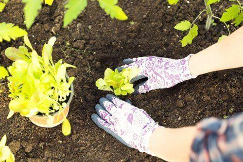 Transplanter une plante dans un jardin