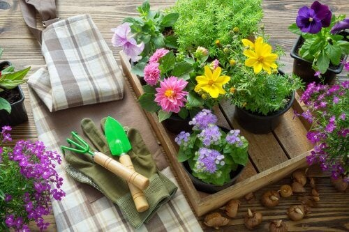 Quelle est la bonne période pour transplanter une plante ?