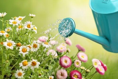 Fabriquez vos propres arrosoirs pour le jardin de manière simple et économique