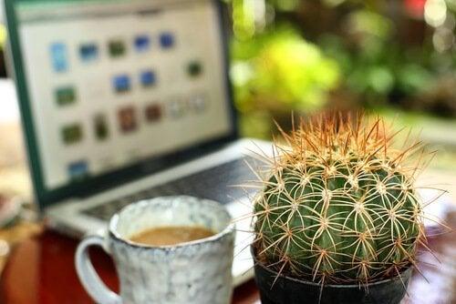 Un cactus et une tasse de café