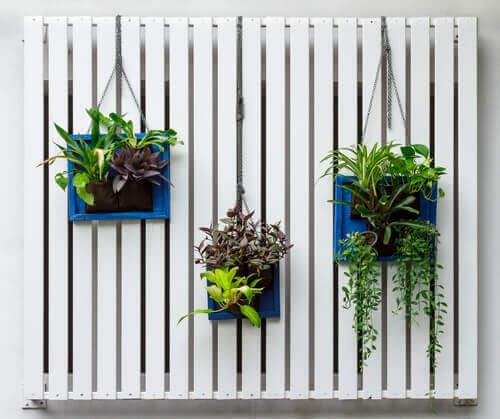 recycler des palettes en mur végétal pour décorer votre jardin