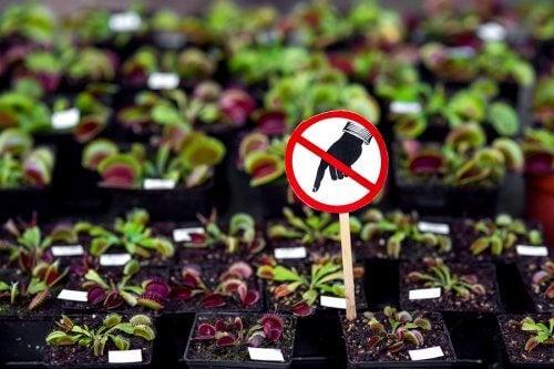 7 plantes dangereuses à bannir de chez soi