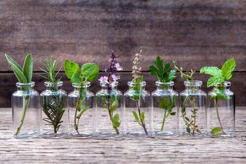 6 types de récipients que vous pouvez recycler pour en faire des pots
