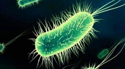 bactérie qui provoque des cystites après les rapports sexuels