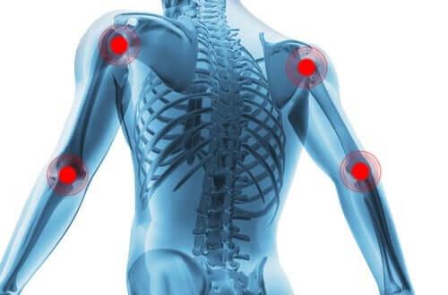 Un schéma du dos avec différentes articulations synoviales