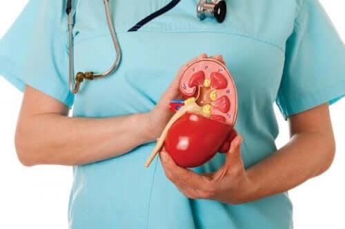 Comment traiter l'acidose rénale hyperchlorémique ?