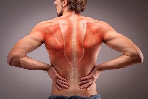 L'anatomie des muscles du dos