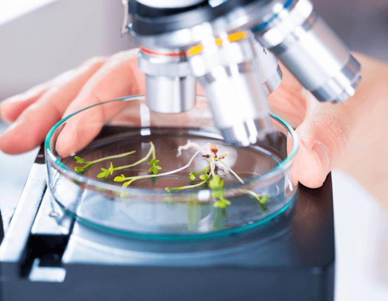 Микроскоп астындағы өсімдіктер