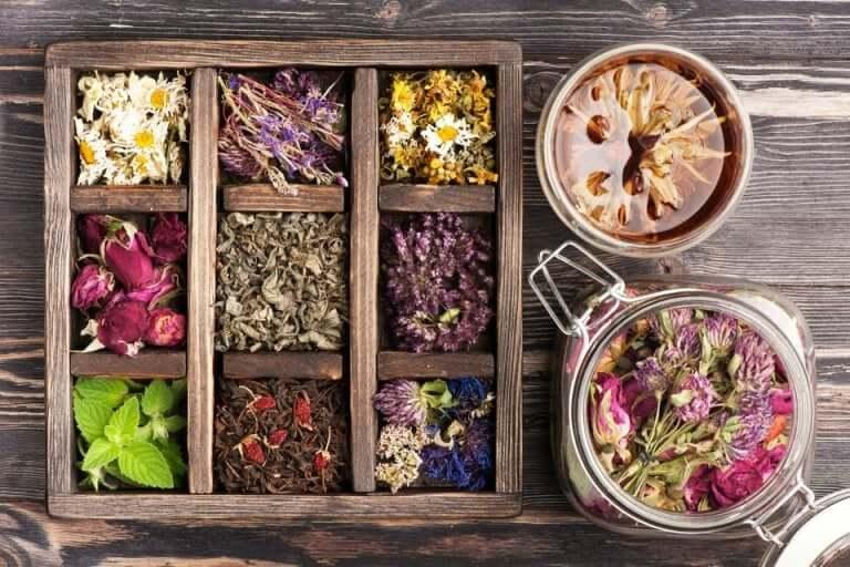 La phytothérapie et les plantes médicinales
