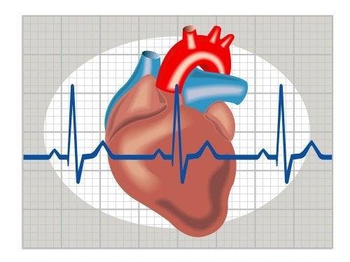 Un schéma du coeur avec la fréquence cardiaque