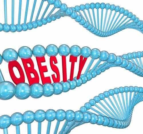 Le gène de l'obésité selon la science