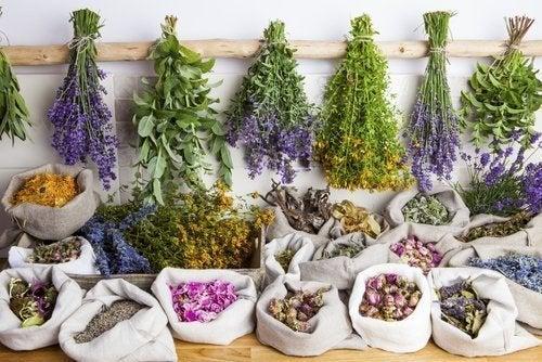 Quels sont les bienfaits de la phytothérapie ?