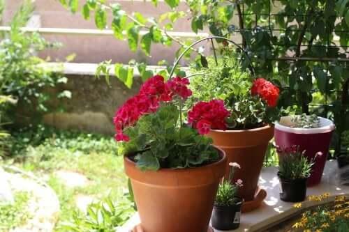 Plantes fleuries d'été : 6 options pour votre jardin