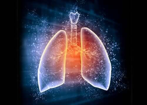 La découpe schématique des poumons