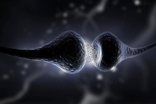 L'effet de la sertraline sur le cerveau