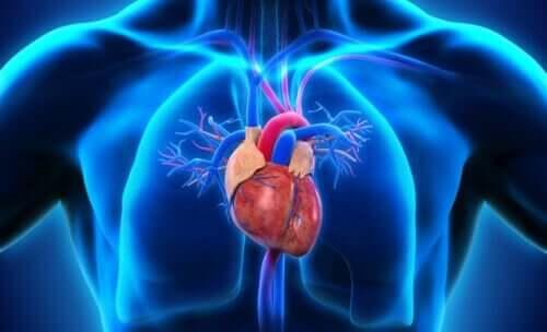 Une illustration du coeur humain