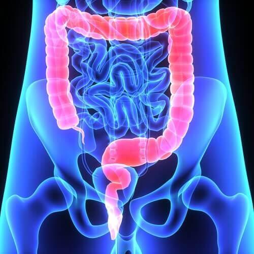 Un schéma du colon